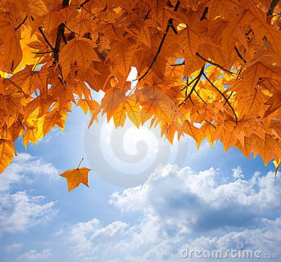 Free Autumn Leaves Royalty Free Stock Images - 16086179