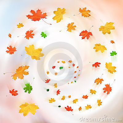 Free Autumn Leaves Stock Images - 16470284