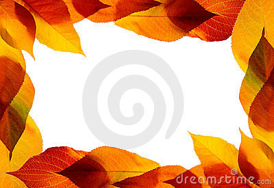 Autumn Leaves Royalty Free Stock Images - Image: 19206229