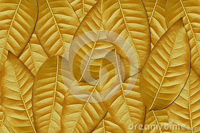 Autumn Leaves Stock Image - Image: 19612391