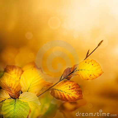 Free Autumn Leaves Royalty Free Stock Photo - 21289185