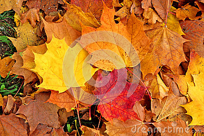 Autumn Leaves Stock Photo - Image: 28080200