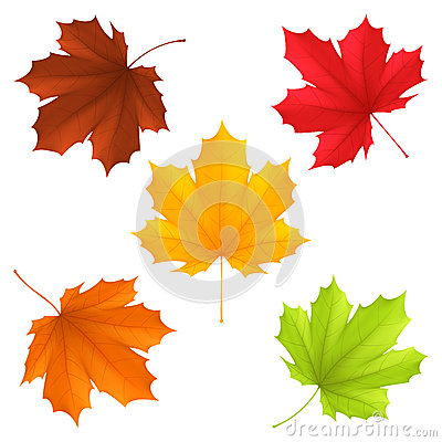 Free Autumn Leaves. Stock Images - 42531264