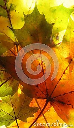 Free Autumn Leaves Stock Photos - 564603