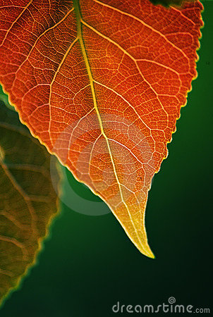 Autumn Leaves Royalty Free Stock Photography - Image: 798447