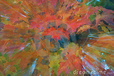 Autumn Leaves in Abstract
