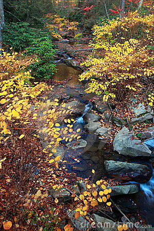 Autumn leaves along creek