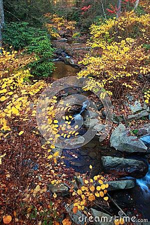 Autumn leaves along creek