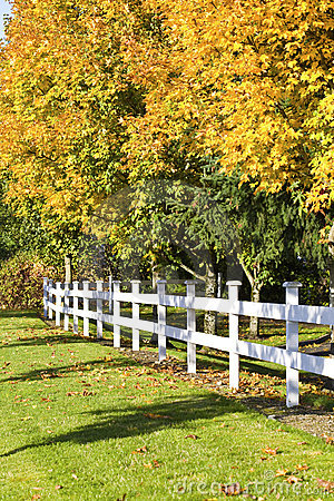 Autumn leaves along white fence