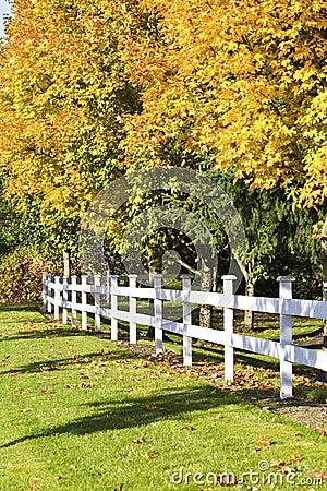 Autumn leaves along white fence