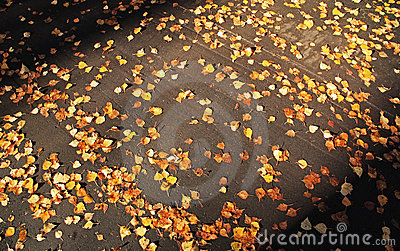 Autumn leaves on asphalt