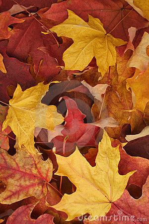 Free Autumn Leaves Background Stock Photos - 15618093