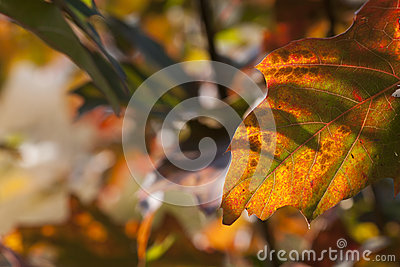 Autumn leaves background leafs