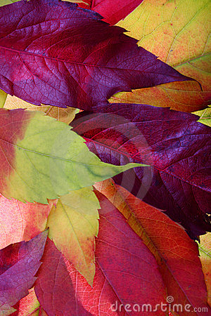 Free Autumn Leaves Backgrounds Royalty Free Stock Photos - 1404788