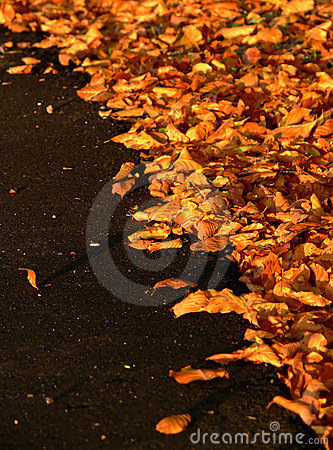 Autumn Leaves on Black Asphalt