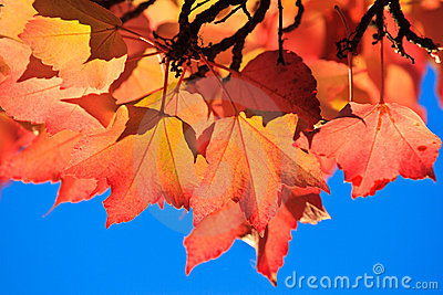 Autumn leaves, colors of fall