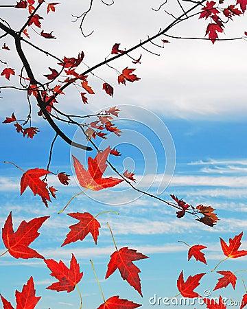 Autumn leaves copyspace