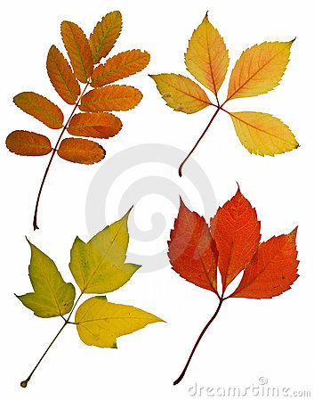 Autumn leaves cutout