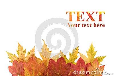 Autumn leaves design element