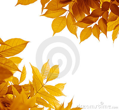 Free Autumn Leaves, Fall Season Stock Photos - 21418363