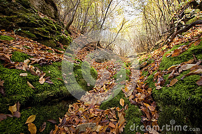 Autumn leaves fallen on green moss in a valley in the forest