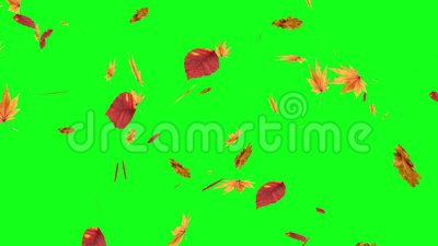 Autumn Leaves Falling Green Screen Stock Video Video Of Leaf Fall 55631667