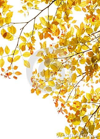 Free Autumn Leaves Foliage Border Royalty Free Stock Photos - 39679898