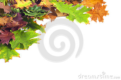 Autumn leaves frame on white background