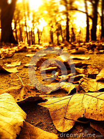 Free Autumn Leaves In Park Path Stock Images - 27880244
