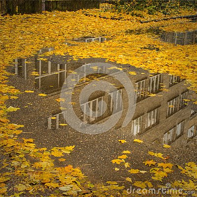Free Autumn Leaves In Puddle Water Reflection Scene Royalty Free Stock Photography - 126686817