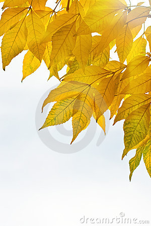 Autumn leaves isolated over whte background