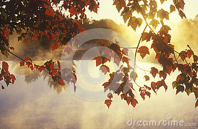 Autumn Leaves and Mist,