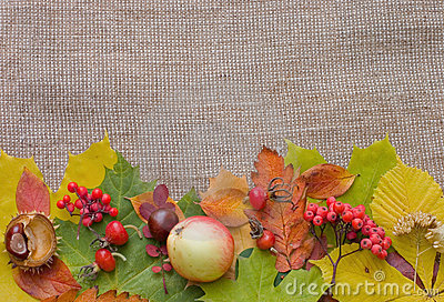 Autumn Leaves over Burlap