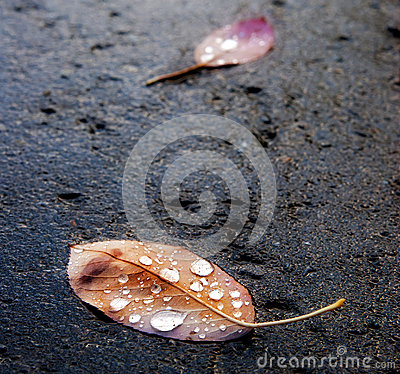 Autumn leaves on pavement after the rain