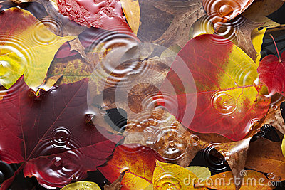 Autumn Leaves Water Rain Background