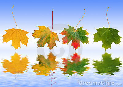 Autumn Leaves Reflected