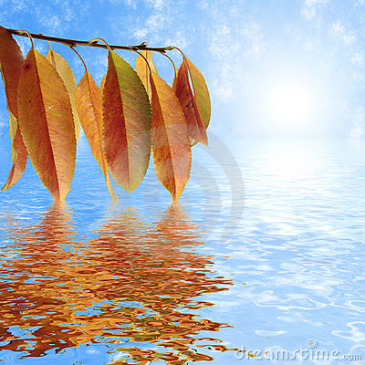 Autumn leaves, reflection in water