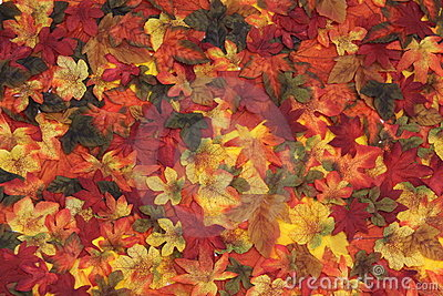 Autumn leaves in season