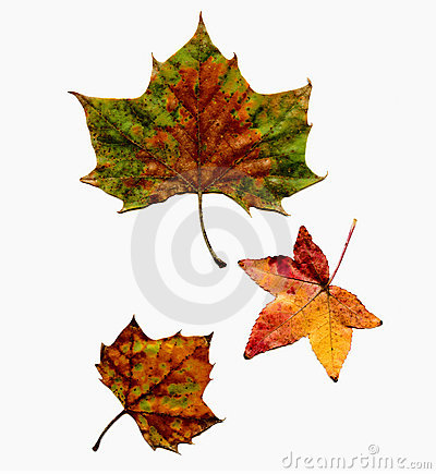 Autumn Leaves Set Isolated