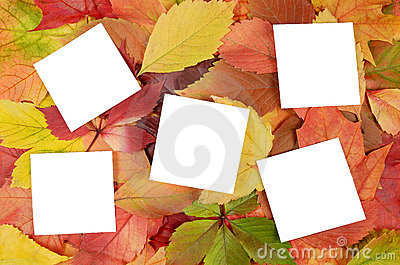 Autumn leaves and sheets of paper
