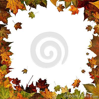 Free Autumn Leaves Square Frame Border Isolated On White Stock Image - 47499751