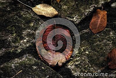Autumn leaves on stones