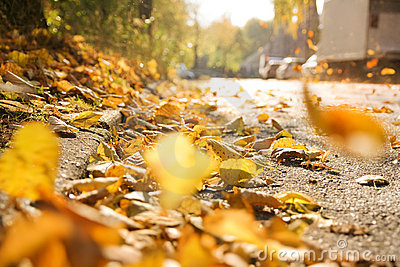 Autumn leaves on street
