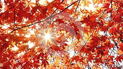 Autumn leaves. stock video