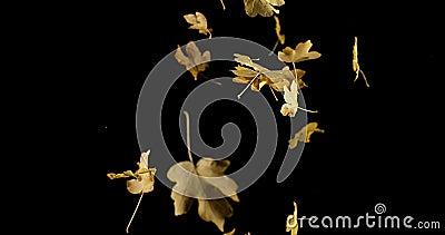 Autumn Leaves tombant sur le fond noir, banque de vidéos