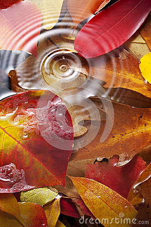 Free Autumn Leaves Water Drop Background Stock Photos - 31443173