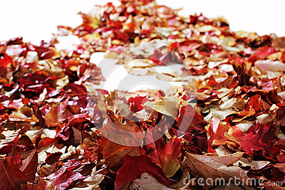 Autumn Leaves on white floor