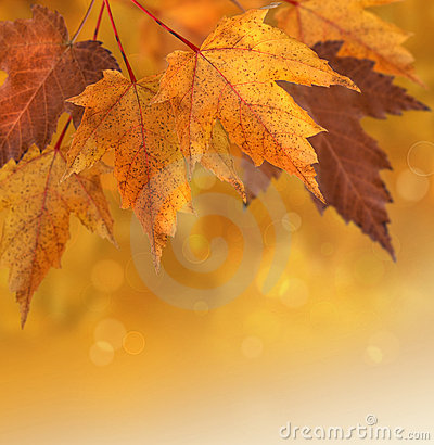 Free Autumn Leaves With Shallow Focus Background Stock Photo - 16391680