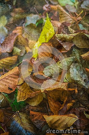 Free Autumn Leaves With Textured Wallpaper Stock Photo - 103441500