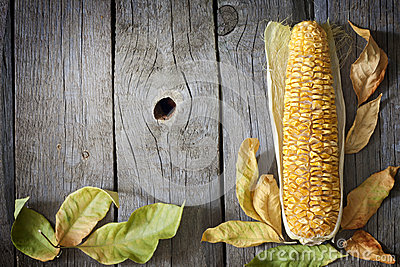 Autumn leaves on wooden boards with corn